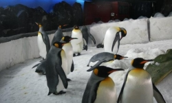 Kelly Tarlton's Antarctic Encounter &amp- Underwater World, Auckland